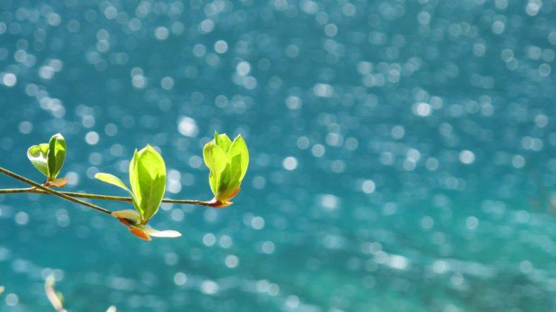 789x443 - 春の海終日のたりのたりかな