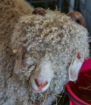 angora goat 191775 340 - 【灼熱】日本の夏はモヘア素材のスーツ一択