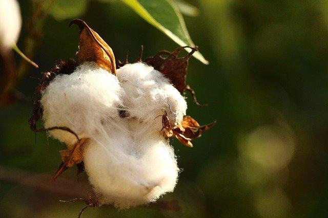 cotton 615103 640 - 綿(コットン)100% アイロンいらずの時代(リンクルフリー)