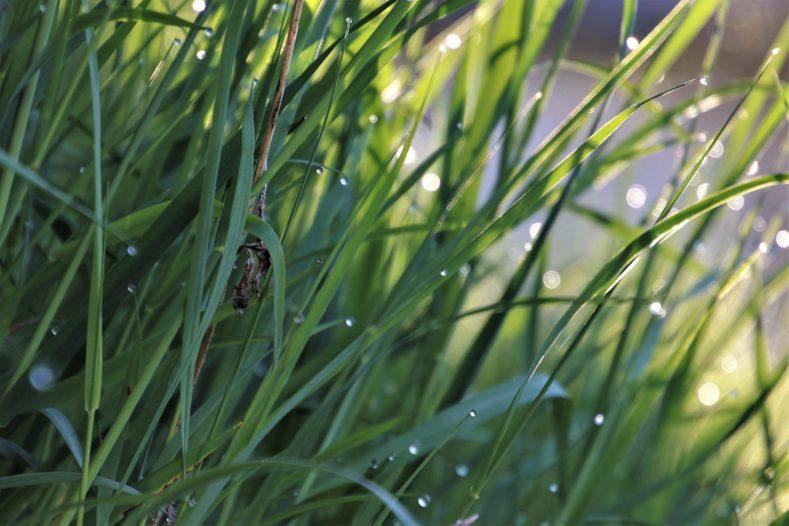 green 4915332 1920 789x526 - たそかれや松に消えこむ春の雨
