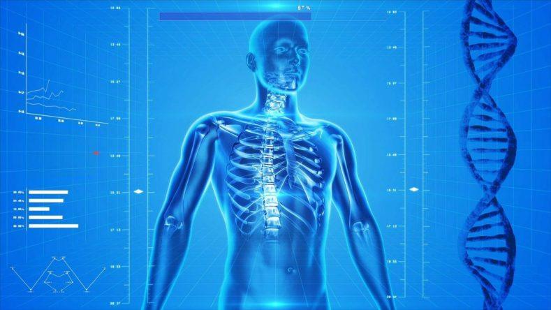 human skeleton 163715 1280 789x444 - ドラゴの「スカイフォール」でオーダーしようと思います。
