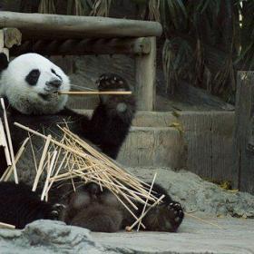 panda 1203101  340 280x280 - 脱スーツによって発生する3種類のオッさん