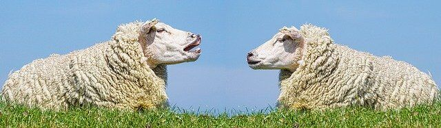 sheep 3557445 640 - 夏と冬のスーツの違いは裏地の有無だけ?