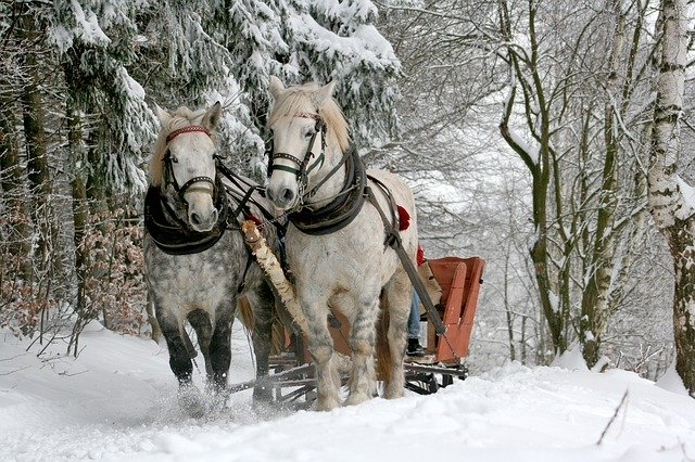 sleigh ride 549727 640 - ローファーの魅力